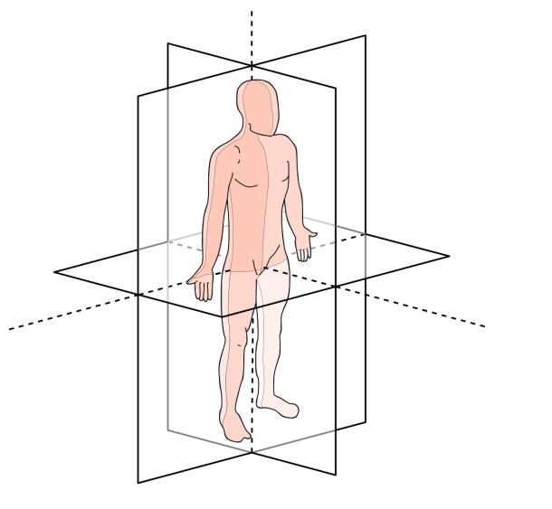 File Anatomical Planes Svg