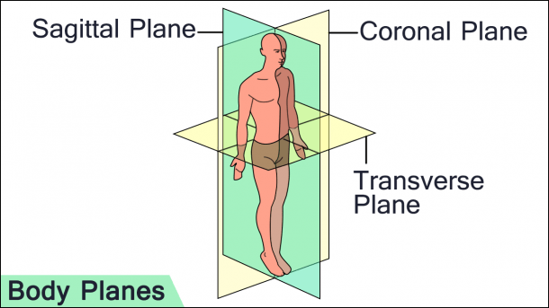 Sagittal, Coronal, And Transverse  3 Anatomical Planes Of Human Motion