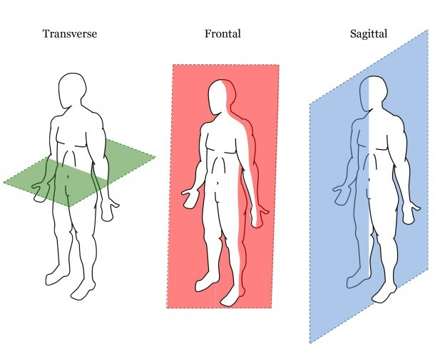 Body Planes Diagram New Anatomical Planes Possible Bodies