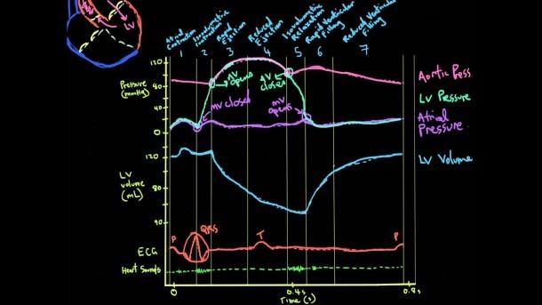 Khan Academy Vid 3  Volume, Ecg, And Heart Sounds In The Cardiac