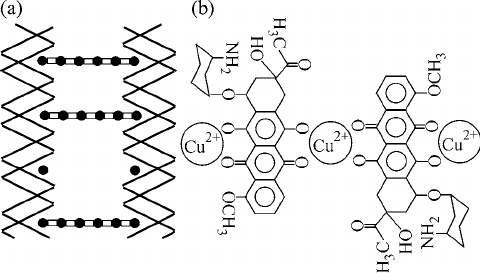Schematic Diagram Of The Formation Of Bridges Between Two Dna