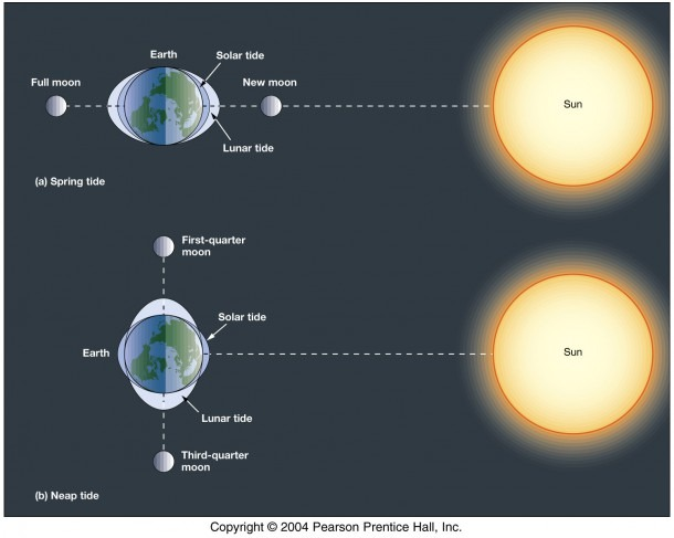 Eclipses, Perigee, Supermoons And Boars…