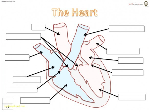 Top Result 50 Unique Simple Diagram Of Human Heart With Labels