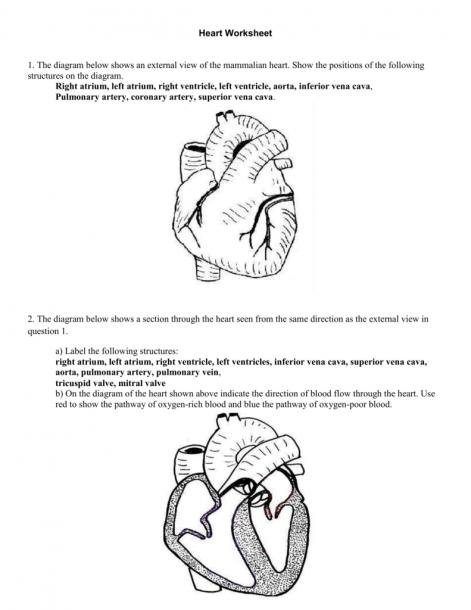 4  Heart Worksheet