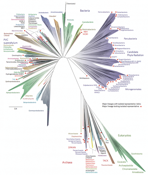 Tree Of Life (biology)