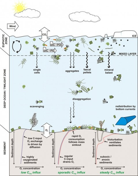 Schematic Overview Of The Pathways Of Organic Matter Production
