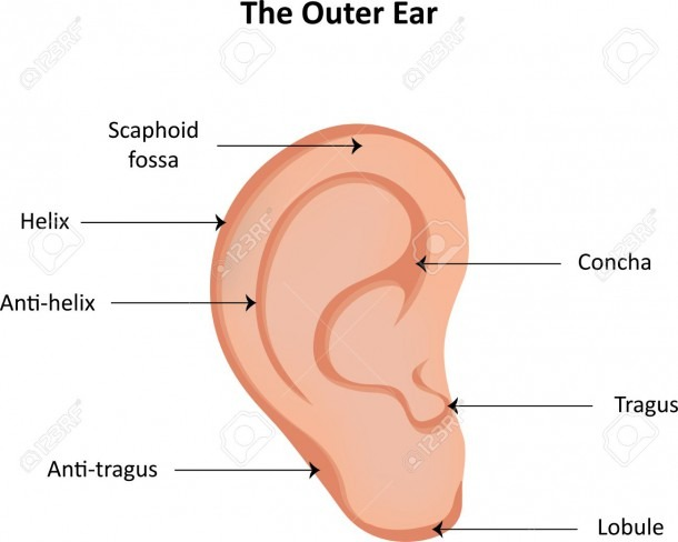 Ear Anatomy Labeled Diagram Stock Photo, Picture And Royalty Free