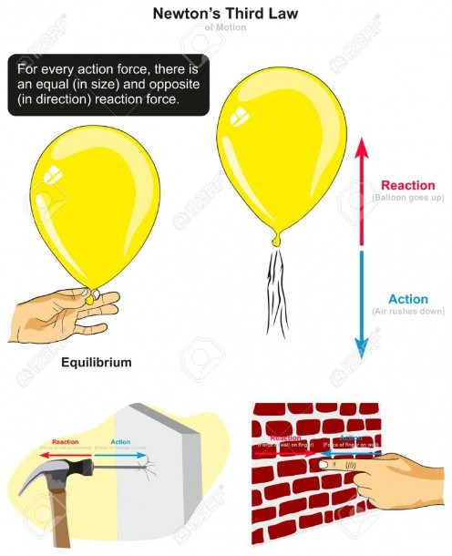 Newton's Third Law Of Motion Infographic Diagram With Examples