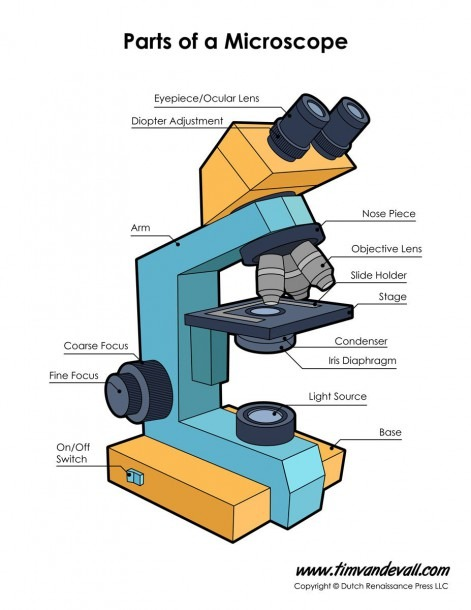 Print A Microscope Diagram, Microscope Worksheet, Or Practice