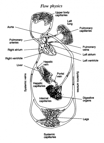 1 A Schematic Diagram Of The Blood Circulation System In The Human