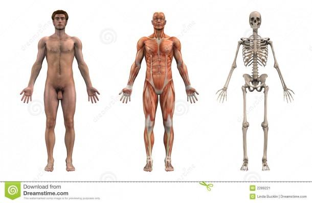 Anatomy Front