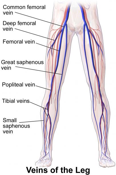 Femoral Vein