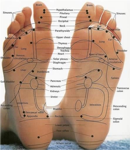 Organ Foot Diagram