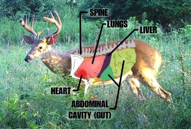 Deer Vitals