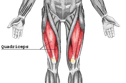 Quadriceps Muscle Diagram