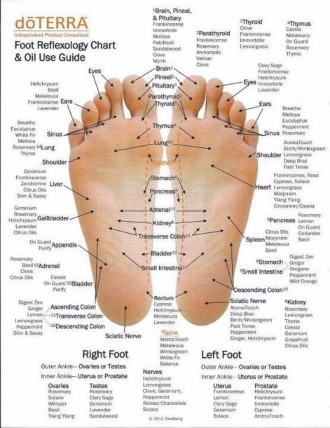31 Printable Foot Reflexology Charts & Maps