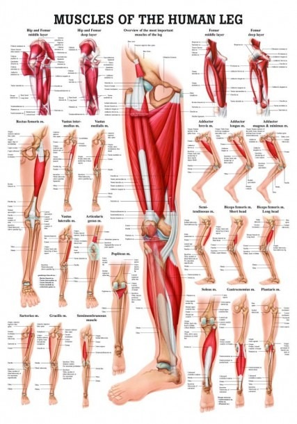 Topic  Leg Archives