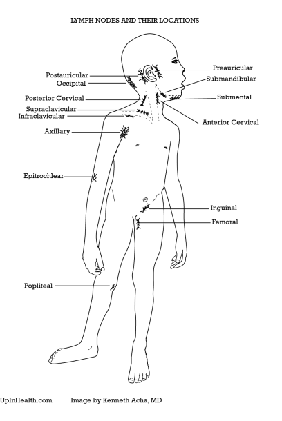 Lymphadenopathy (enlarged Lymph Nodes) – Peds & Adults