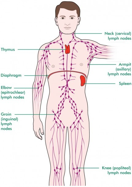Tests To Check Your Lymph Nodes