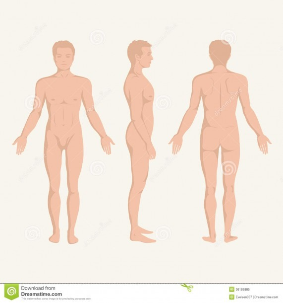 Man Body Anatomy, Front, Back And Side Stock Vector