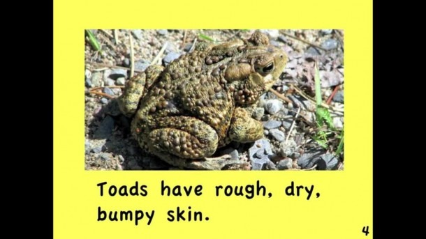 Frogs And Toads Written By Linda Zuniga
