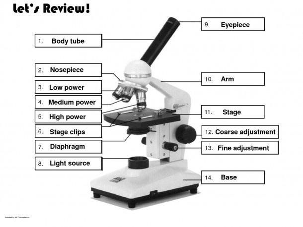 Microscope Diagram