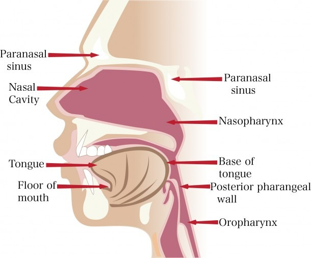 Human Anatomy  Nose Anatomy Nose Anatomy And Physiology, Nose