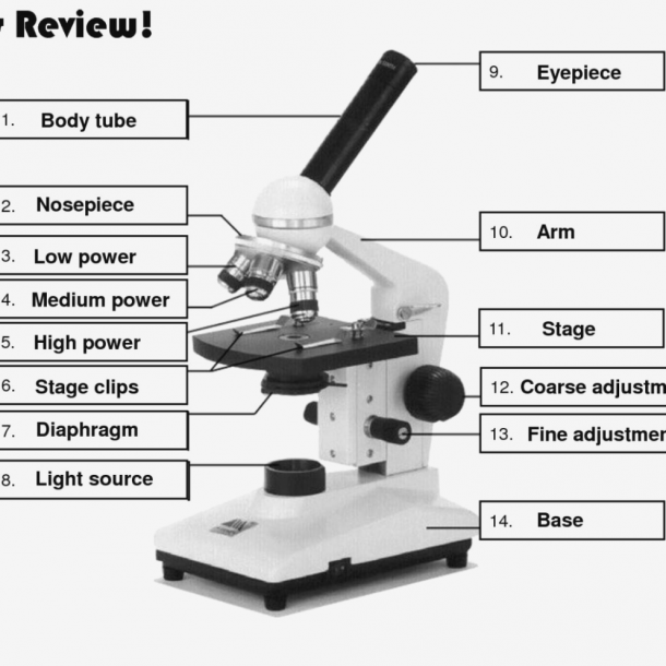Parts Microscope Worksheet Diagram – Wiring Diagram Services