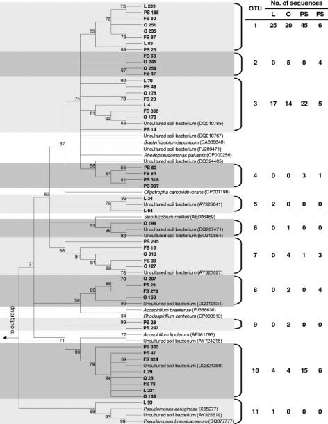Phylogenetic Tree Of Nosz Sequences Retrieved From The Alimentary