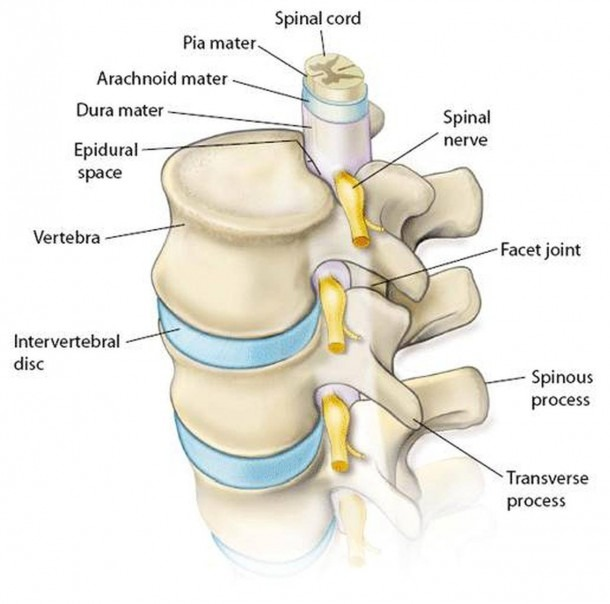 Pictures Of Cervical Spine