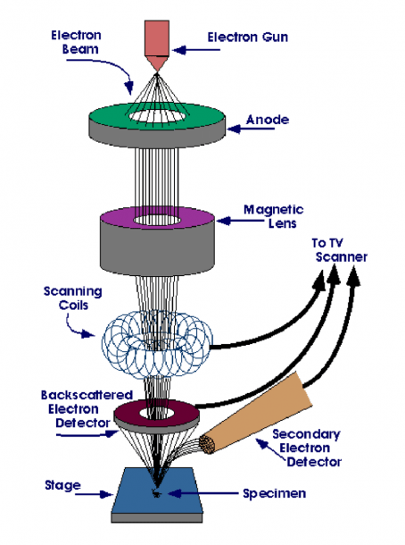 10  Schematic Diagram Of Field Emission Scanning Electron
