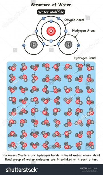 Structure Water Infographic Diagram Showing Molecule Stock