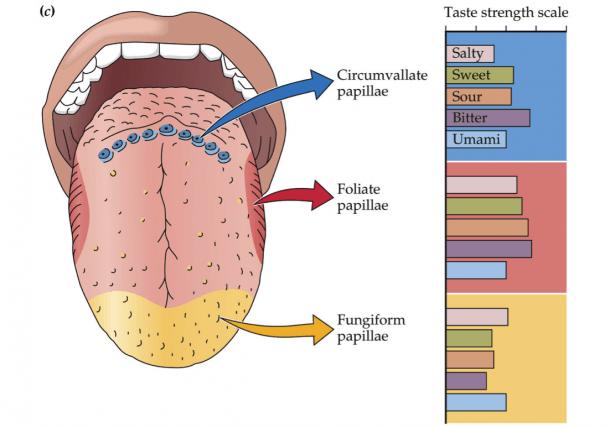Tongue Diagram