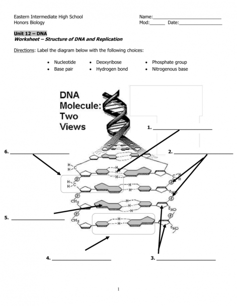 Label Dna Diagram