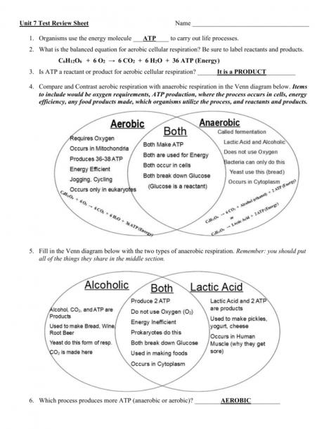 Aerobic Vs Anaerobic Respiration Venn Diagram