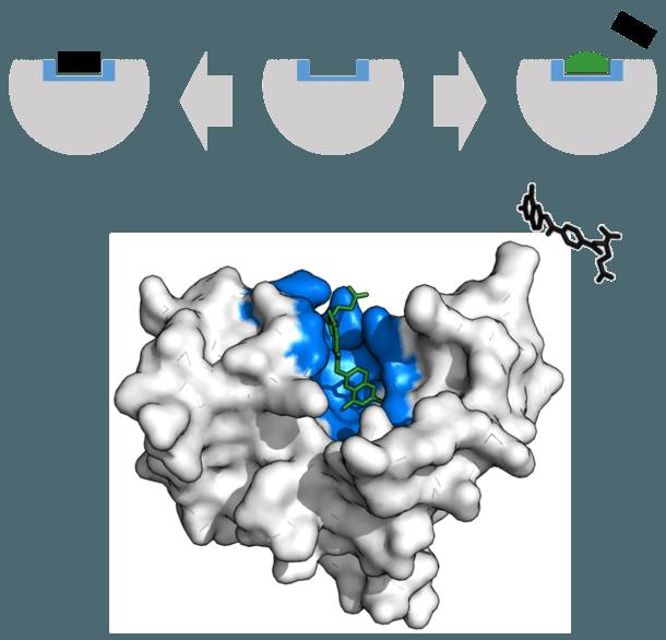 Enzyme Inhibitor