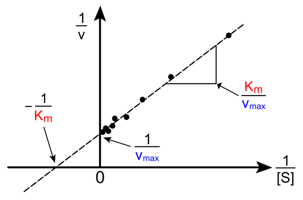 Lineweaver–burk Plot