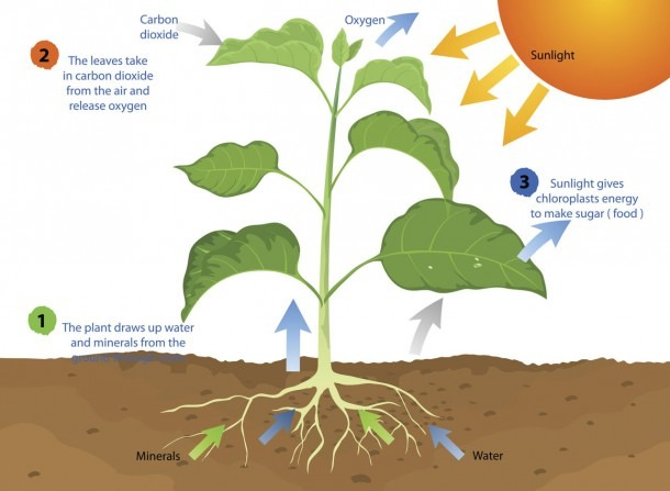 All You Need To Know About Photosynthesis And Cellular Respiration