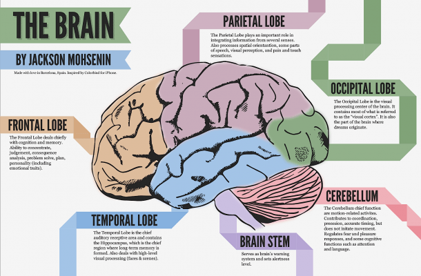 Psychology Brain Infographic
