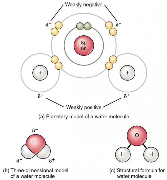 2 2 Chemical Bonds – Anatomy And Physiology