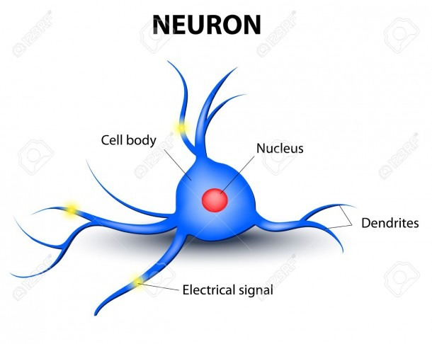 Human Nerve Cell On A White Background Royalty Free Cliparts