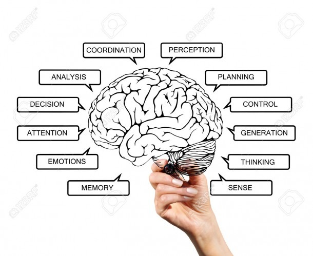 Diagram Of Brain Functions, Drawn With A Marker On Transparent