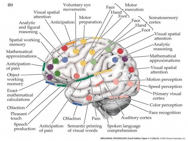 Pin By Marty Bateman On Ron Neurology