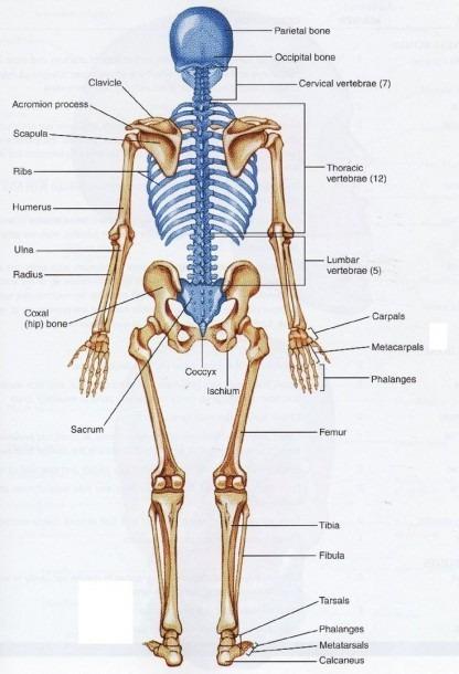 Back Bones Diagram