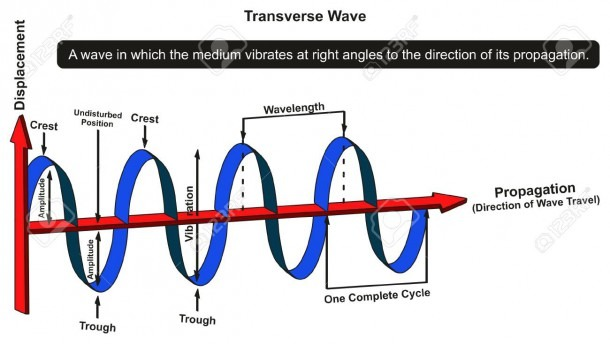 Transverse Wave Infographic Diagram Showing Structure With