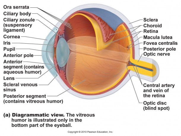 Eye Model Diagram