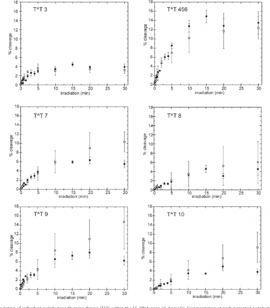Accumulation Of The Cyclobutane Thymine Dimer In Defined Sequences