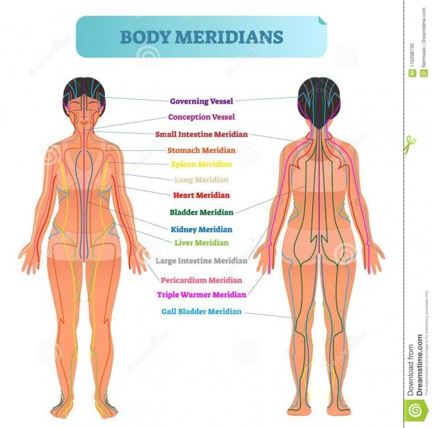 Body Meridian System Vector Illustration Scheme, Chinese Energy