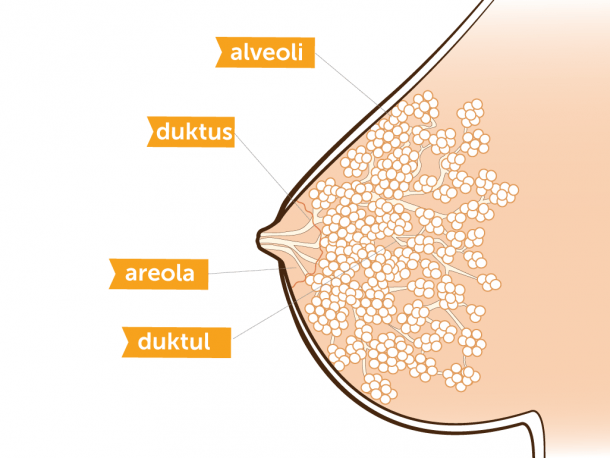 Breastmilk  How Your Body Makes Milk For Your Baby