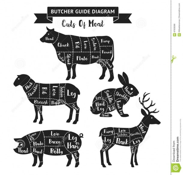 Butcher Guide Cuts Of Meat Diagram  Stock Vector